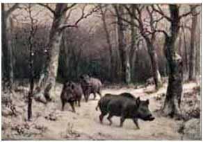 something wild pigs