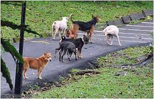 Dog pack2