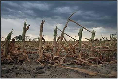foodprice crop